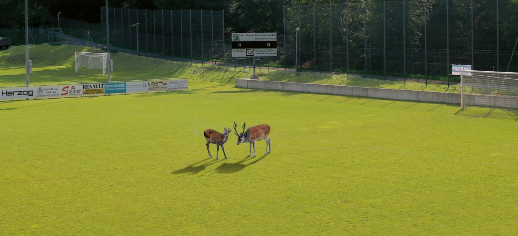 Sportplatz_mit_Sikas_web